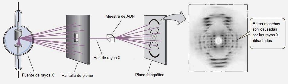 Cristalografía con Rayos X. Crédito: IES Rosa Chacel, España