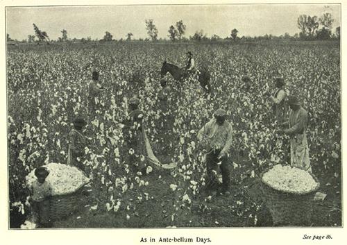 La economía del sur de Estados Unidos en el siglo XIX estaba ligada a la mano de obra esclava. Crédito: web sobrehistoria.com