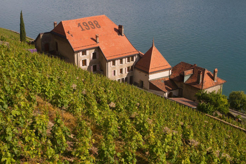 Viñedos y lago Leman, en Chexbres, Suiza. Crédito: web perroviajante.com